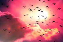 free as a birds...