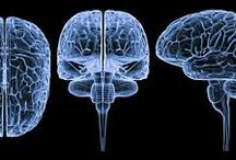 sistema nervioso y endocrino /  imagenes del sistema  nervioso y endocrino