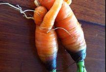 abraço de cenouras