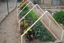 raised containers