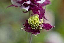 Blumen Mai