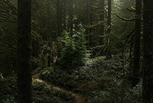 Forest philosophy / A board about forests. The path to the truth is passing through silent trees deep in the woods...