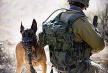 military dog 2