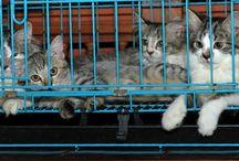 cat and cat
