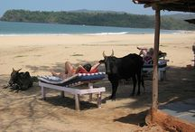 India Beaches / Top beach destinations and vacations in India.
