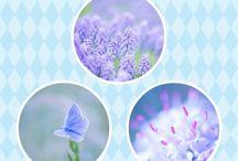 collages / met mooie foto's een hele leuke collage