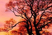 trees are views / by Angie Schwab Bradbury