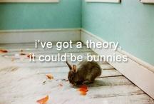 conejos and pets