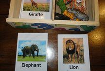 Animais selvagens creche
