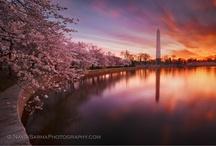 Beautiful photos! / by Stephanie Hammond