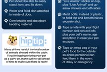 Pet Travel Guide / by zooplus.co.uk