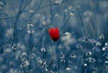 çiçek-bitki-mantar