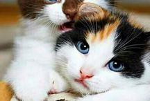 tatlı kedi