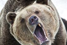 Des ours.