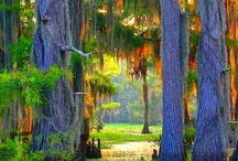 Swamps / I grew up in Louisiana and spent a lot of time in the swamps- I find them totally serene and magical - so beautiful and full of life. / by George Hogg