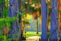 In the Bayou