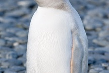 Tweet - so sweet!Or fwoar we soar! )Our feathered friends)