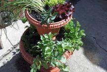 Garden - kert; plants-növények