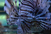 Mers chaudes et tropicales / Admirez les espèces aquatiques des mers chaudes et tropicales à l'aquarium de Vannes dans le Morbihan