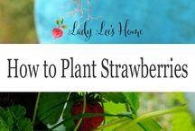vis en tuin plante