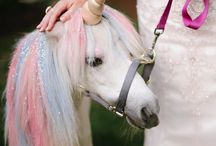 Weddings | Bizzare and Quirky / Over the top scary bizarre Weddings