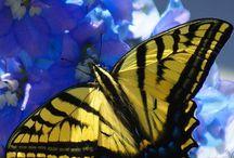 Perhoset / Butterfly