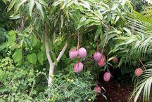 Tropical & Subtropical Edible Garden / Fruit, vegetables, and herbs for tropical and subtropical edible gardens.