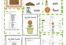 Natuur en school / Inspiratie rond natuur in en rond de klas