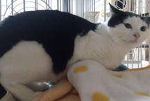 里親さまが決まった保護猫たち / 里親さまがきまった猫を紹介