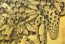 ilustras cientificas