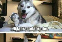 Σκυλοι