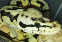 My reptiles