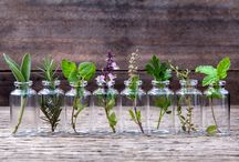 Fresh herbs and uses