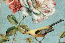 TRANSFER / BIRDS