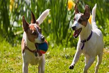 Dog Play and Exercise Articles and Tips / Learn about different ways to play and exercise with your dog to keep them happy and healthy, while strengthening the bond between you two. Get tips on how to exercise, choose the right toys, and games the two of you will enjoy together.