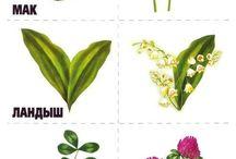 rastliny, kvety
