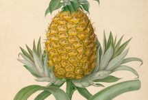 Fruits illustrations