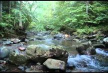 Waterfall Hikes