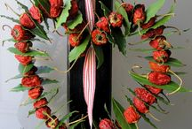 Alloro - Bay Leaf / Vendita Online Piante di Lauro Nobilis Alloro - Sale Online Bay Leaf.
