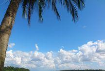 Suriname South America / Holiday Nature City Suriname