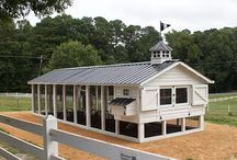 Commercial Chicken Coops