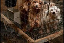 Puppy Mills / This is a public awareness board to show the cruelty of US puppy mills. Some images may be disturbing.
