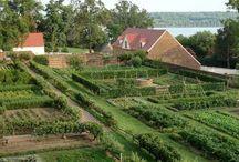 Food Gardens