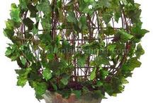 Amo los Topiary / by Mary Ruiz