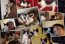 Krystie  / My lil cutie Minx cross Persian cat..❤