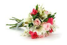 IL GALATEO DEI FIORI / Un amore da conquistare? Un compleanno, un anniversario da festeggiare? È Natale, Pasqua o la Festa della Mamma? Quante occasioni per regalare un bel mazzo di fiori … ma quali fiori regalare? E di che colore? Un mazzo di fiori o una pianta verde?