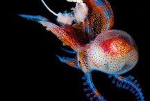 Sea life and more
