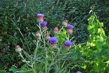 Plantas medicinales. / Presentar fotografías de plantas acompañadas de sus propiedades, especialmente las medicinales.