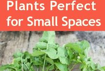 Small Space Gardening / Most of us don't have a lot of space to garden - but that's OK! With these small-space gardening tips, you can still practice your green thumb skills.