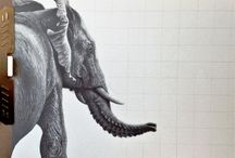 Animal Wildlife Drawings / Graphite Drawings